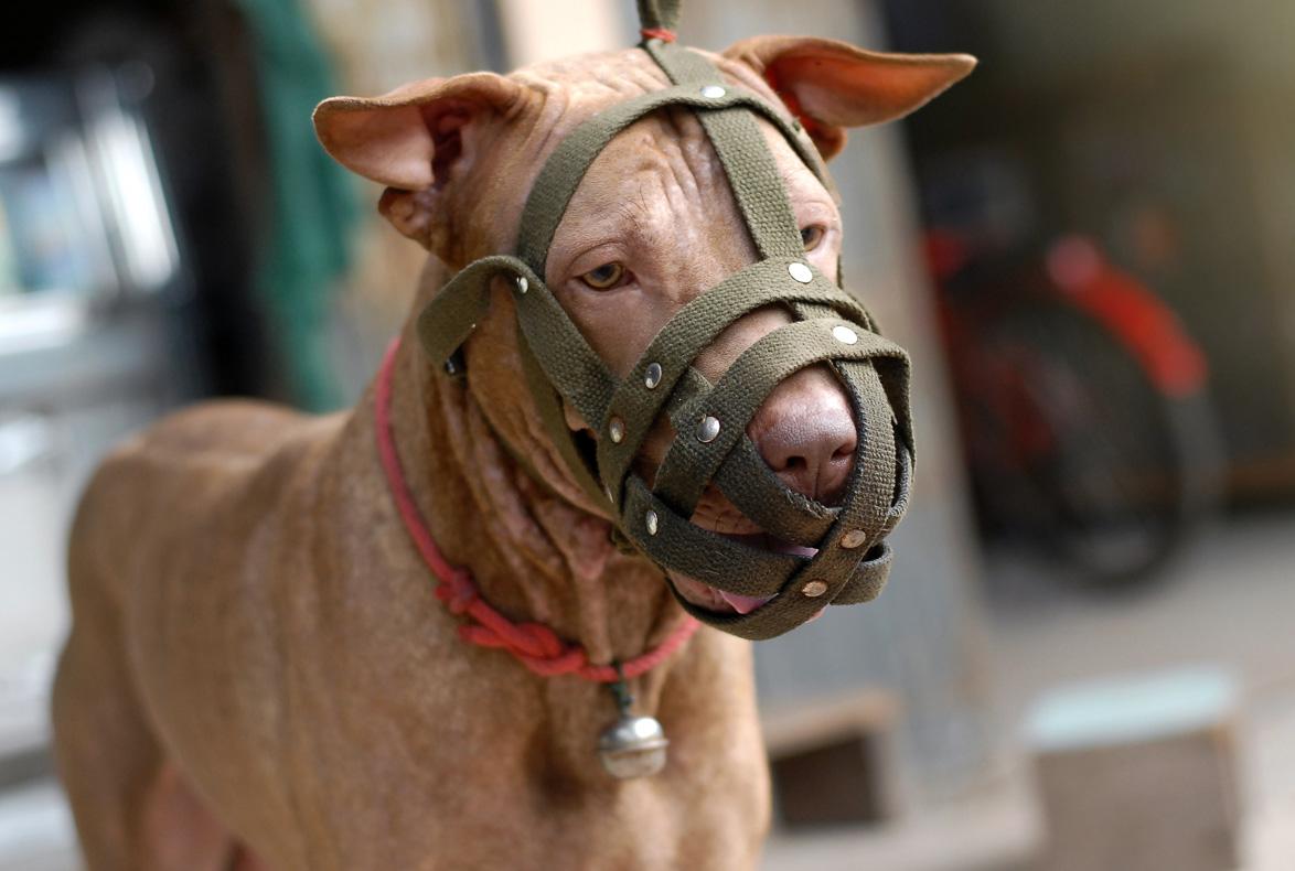 Cuidado con tus vecinos: La AVPD ha avalado que un ayuntamiento pueda sancionar al dueño de un perro en base a unas fotografías de un vecino.