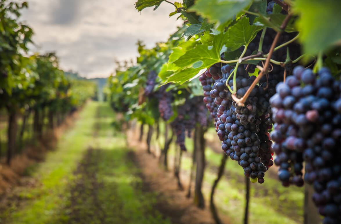 ¿Son las Denominaciones de Origen en el sector del vino parte de la solución o parte del problema?