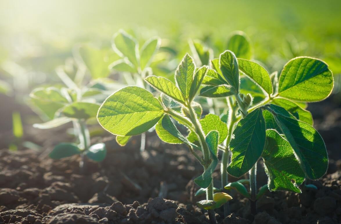 El avance de las obtenciones vegetales: con San Vicente y Las Granadinas, la UPOV suma 77 miembros